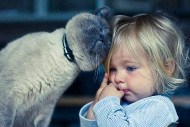 8. Кот всегда успокоит.