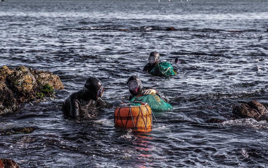 5. Свой промысел они ведут в холодных водах Корейского пролива.