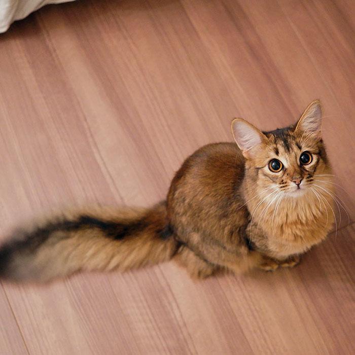 12. Кошка Люсина прикидывается белкой.