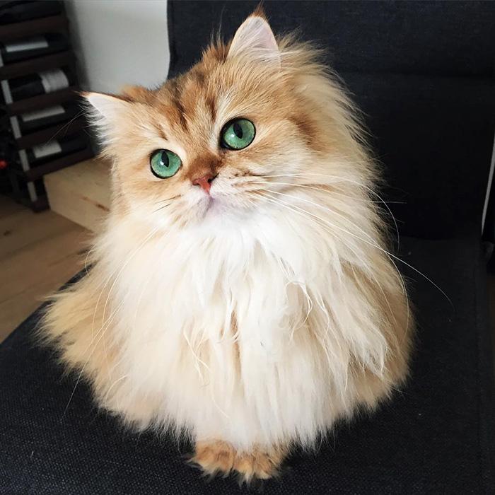 2. Смузи, самая фотогеничная кошка в мире.
