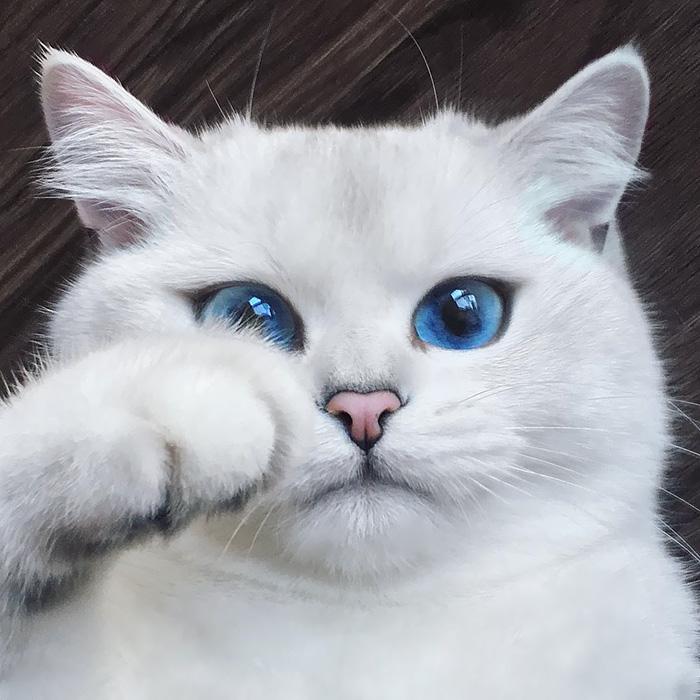 3. Коби, голубоглазый красавец.