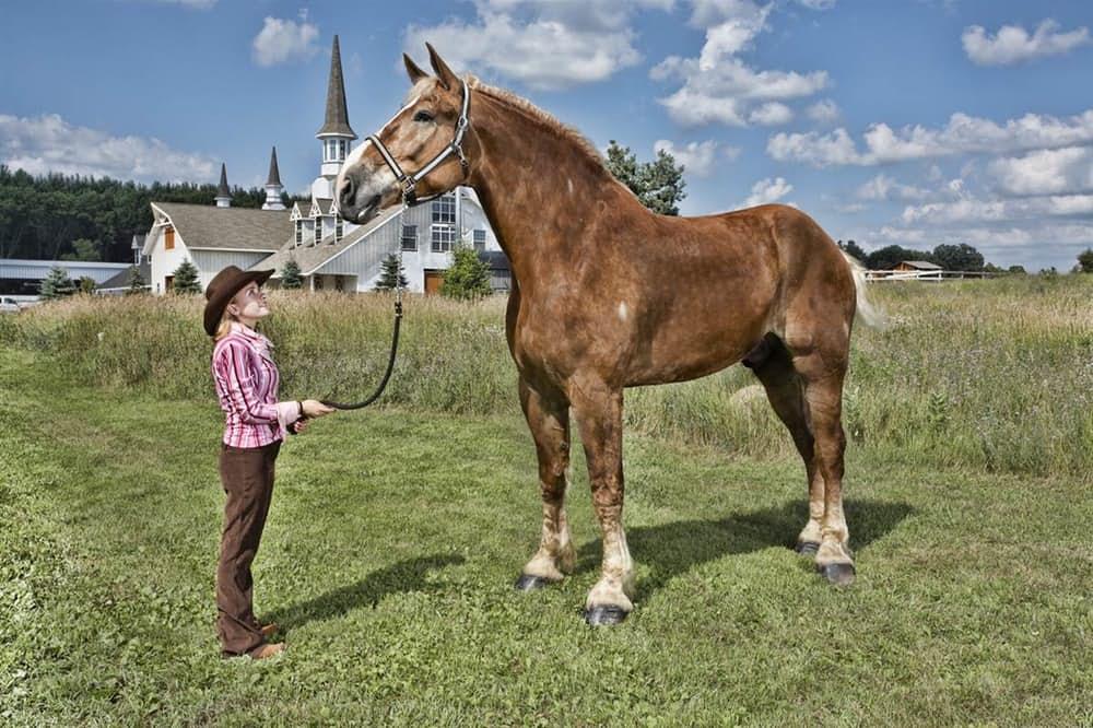 8. Конь Биг Джейк.