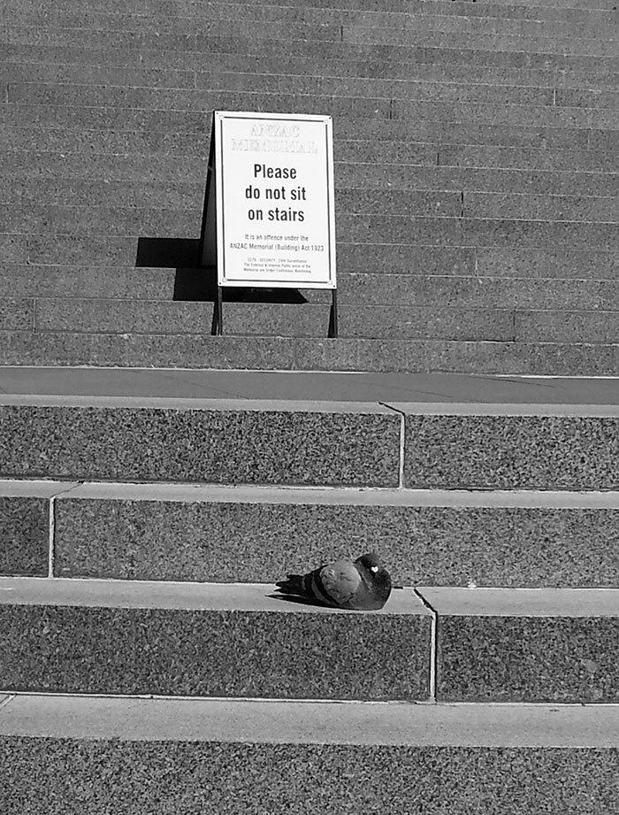 7. «Пожалуйста, не сидите на ступенях», гласит надпись. Но этот голубь плевал на правила.