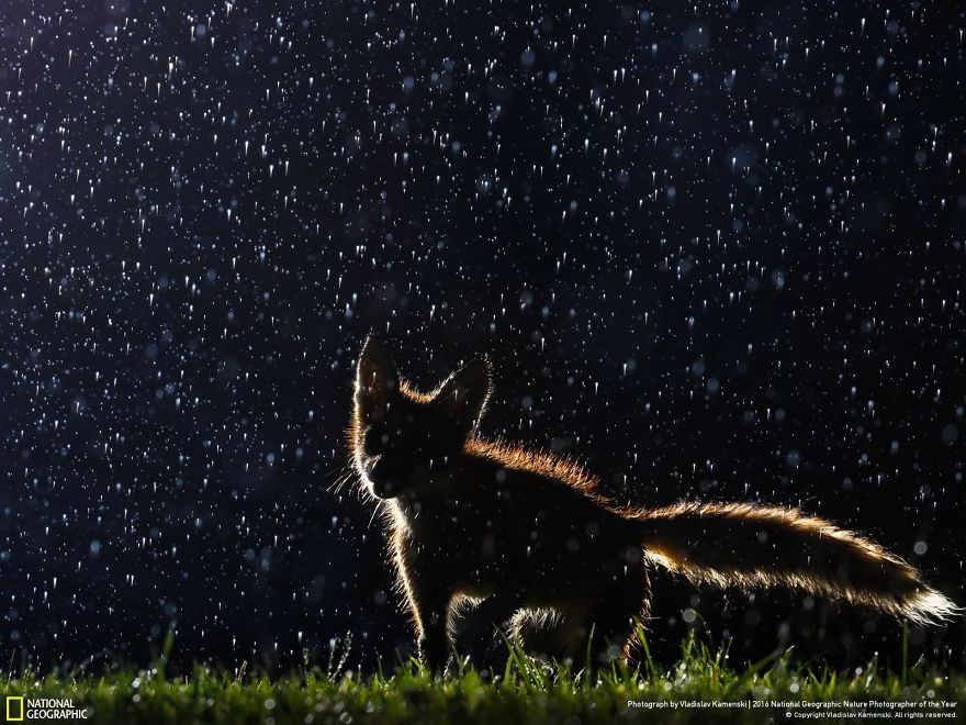1. Танцы под дождем.