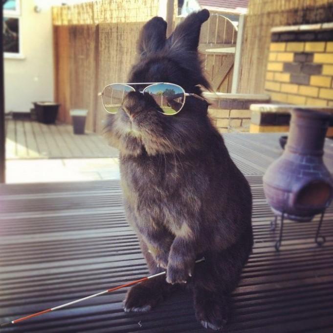 Крутой кролик в очках стал героем интернета