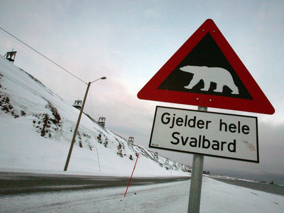 12. Дополнительным источником безопасности служат белые медведи, которые превосходят свой численностью людей на острове.