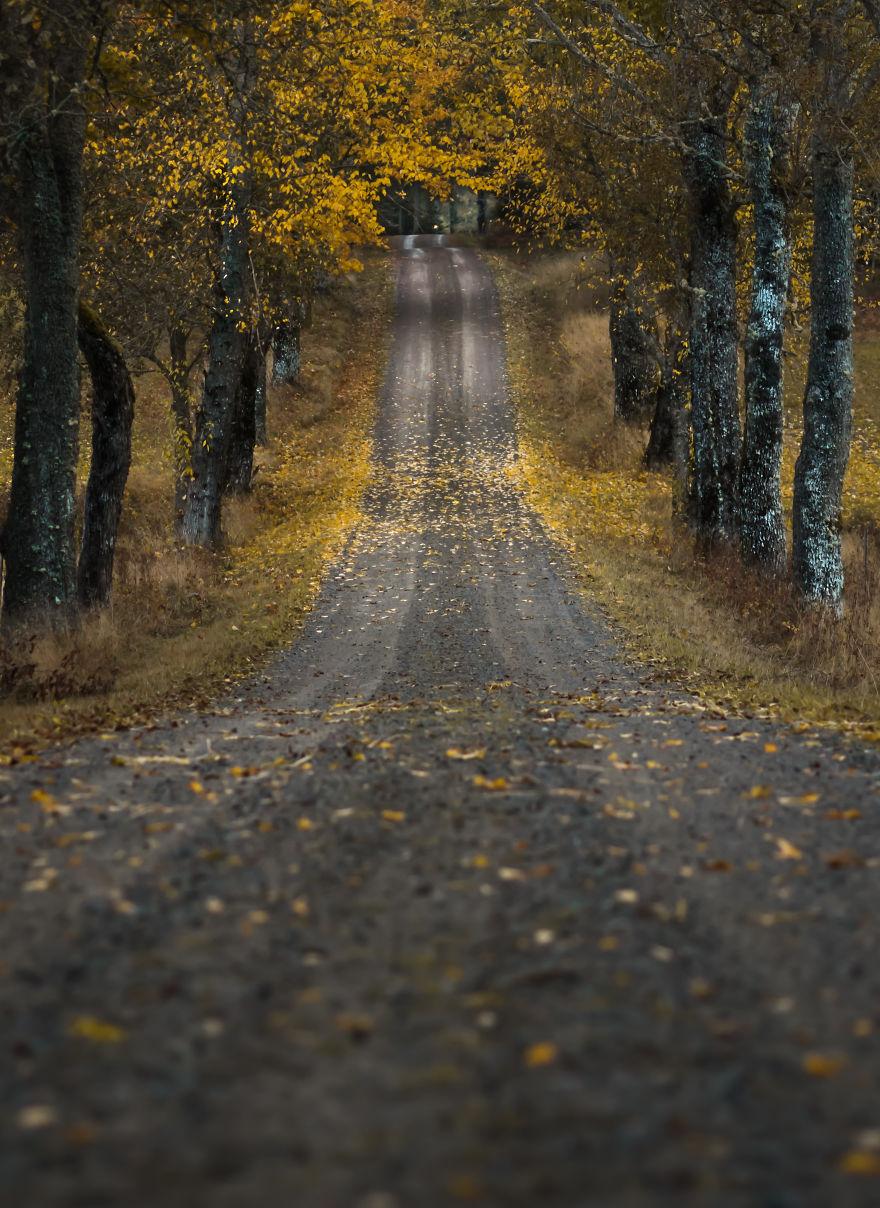 11. Осенняя дорога.