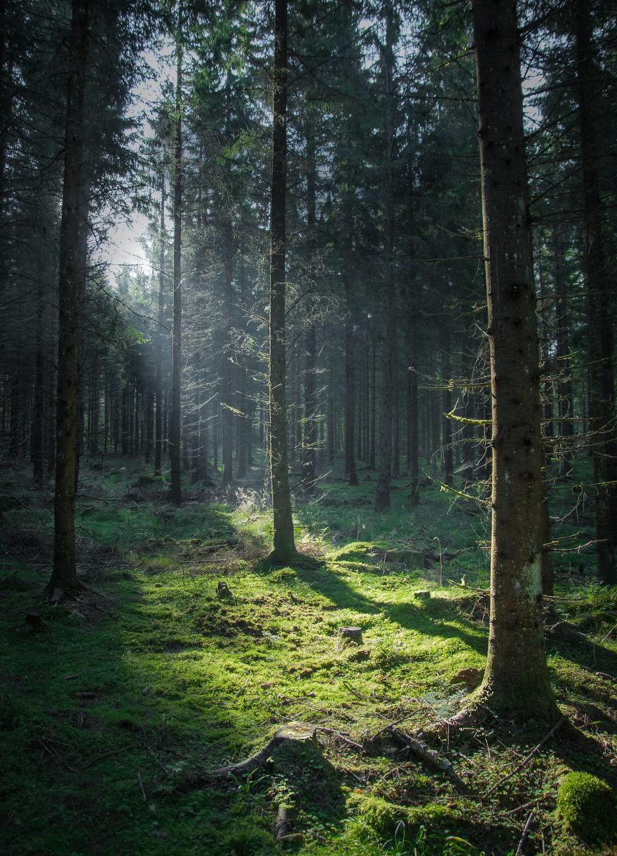 5. Шведский лес.