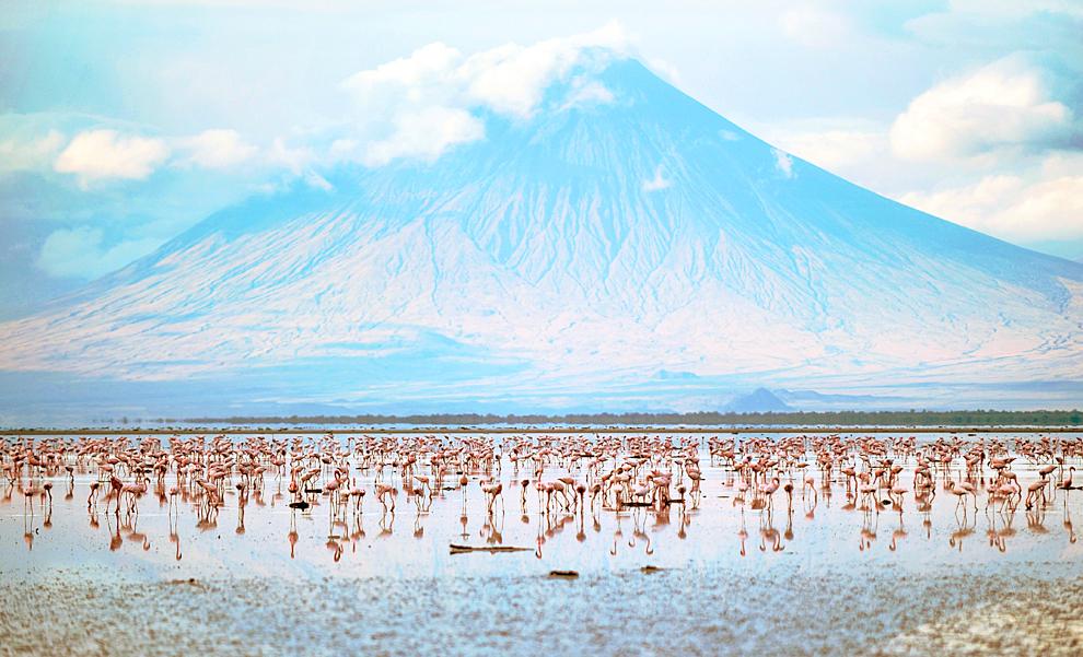 14. Озеро Натрон в Танзании. Это озеро является единственным постоянным местом размножения малого фламинго.