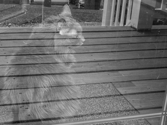 12. Призрачный кот.