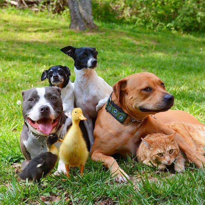 1. Это Рокси, Эдис, Миа, Роуз, Джейк, Гертруда и Дональда – самая удивительная семья животных.