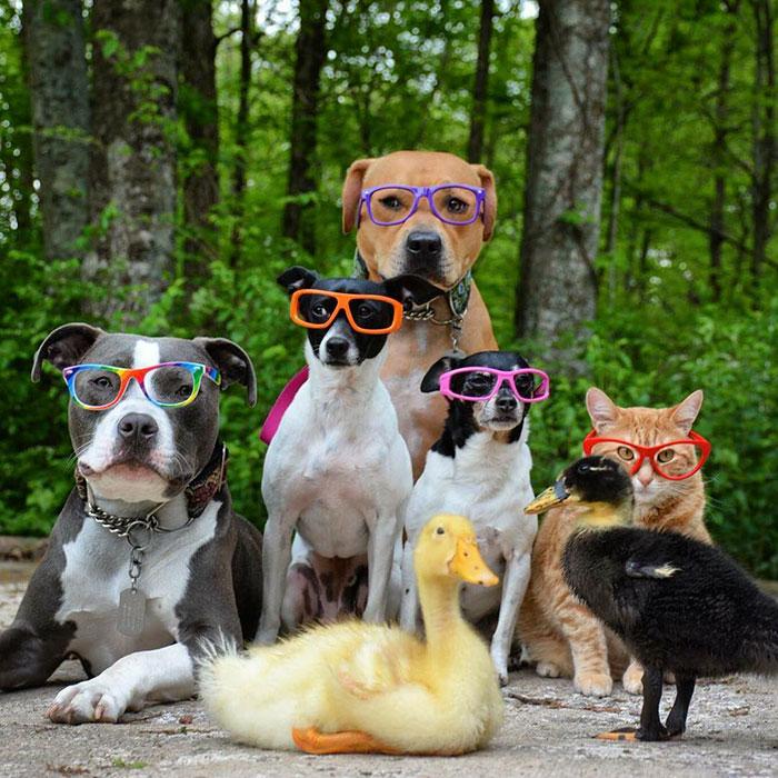 стальной картинки с веселыми животными для всей семьи днем