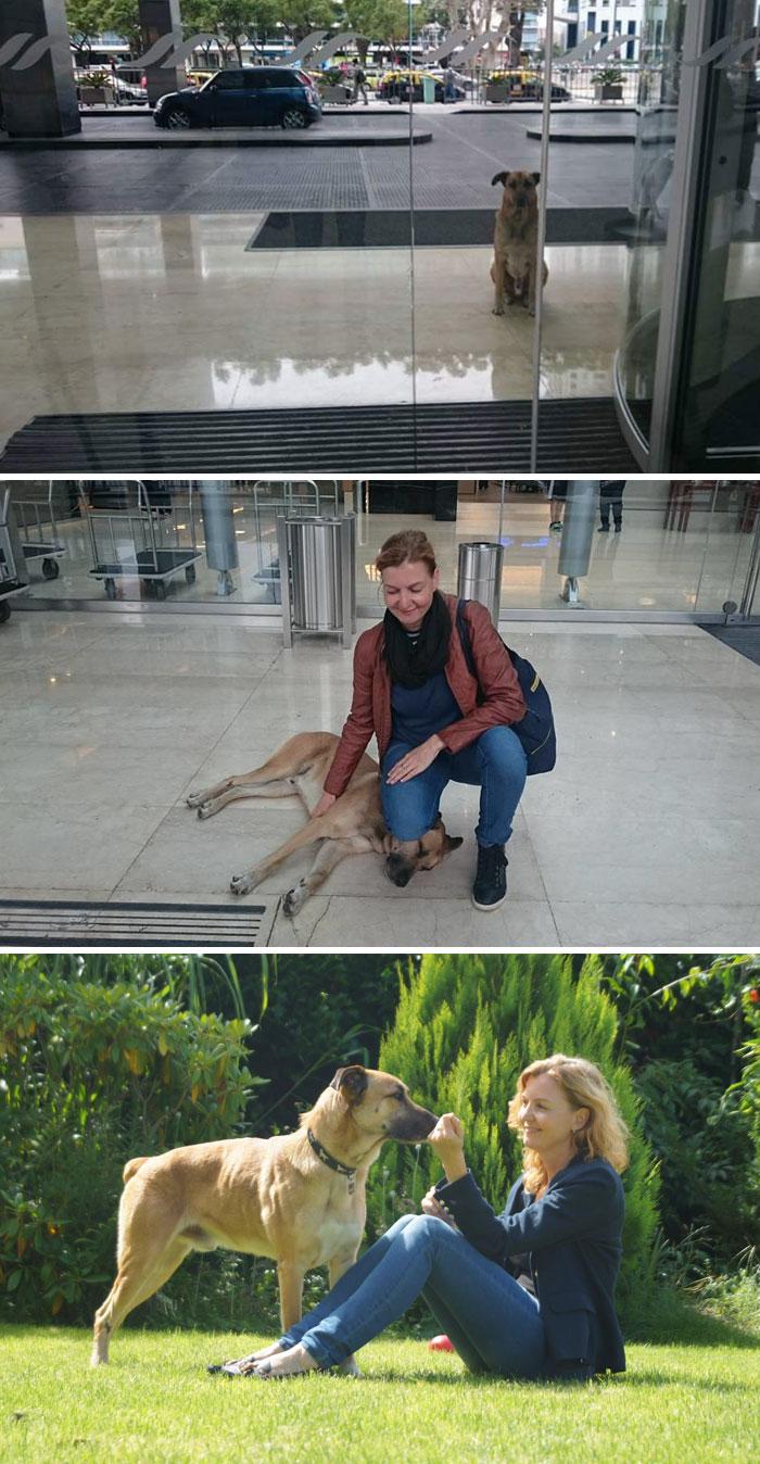 5. Стюардесса забрала домой бездомного пса, который каждый день ждал ее у входа в аэропорт.