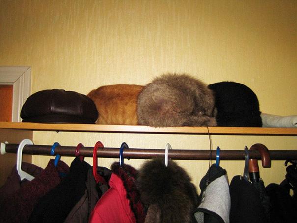 12. Коты или шапки?