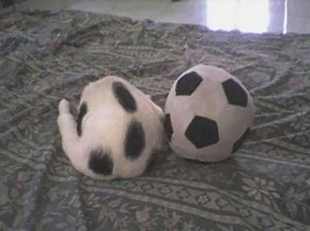 13. Футбольный кот.