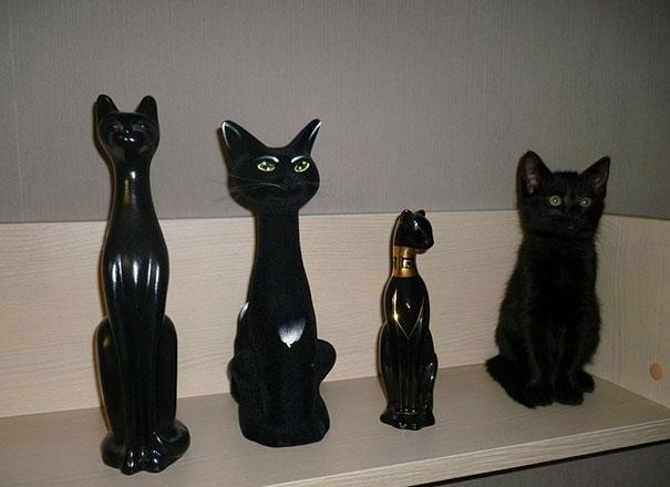 2. Сколько котов вы заметили?