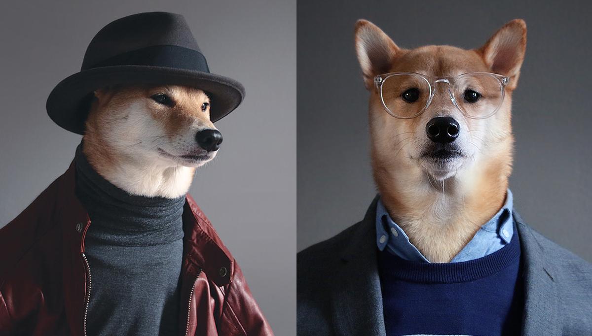 2. Пес-модник. Этот пес породы шиба-ину известен благодаря своему хозяину, который регулярно фотографирует его в различной мужской одежде.