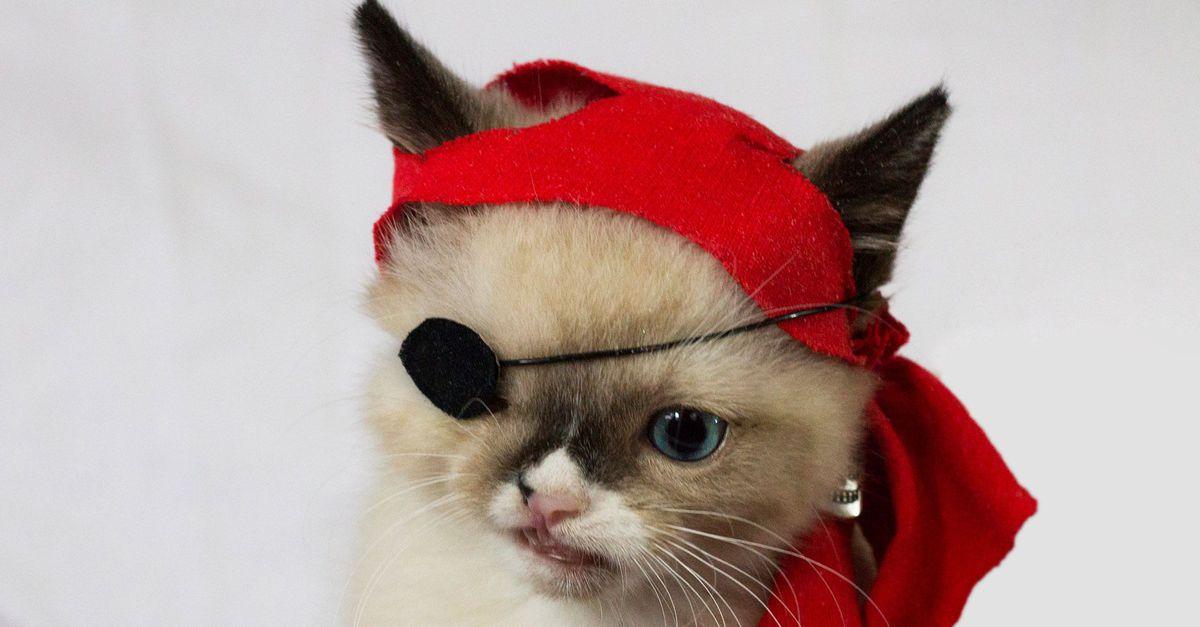 3. Сэр Стафиингтон. Одноглазый котенок с повязкой на глазу по праву заслужил титул самого мимишного пирата в мире.