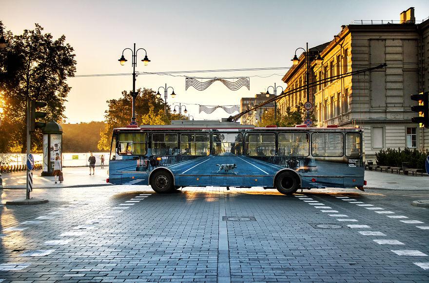 1. На этом «исчезающем троллейбусе» изображена улица и вол, который является духовным животным и символом Вильнюса. Волк пересекает улицу.