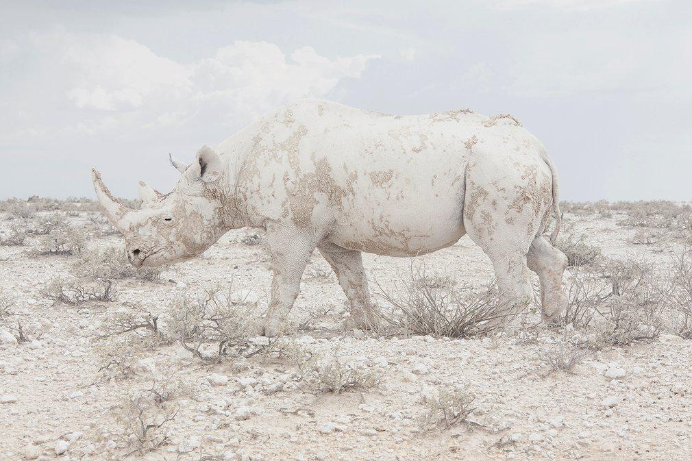 18. Носорог. Фото Маросейка Лавин. Sony World Photography Awards.