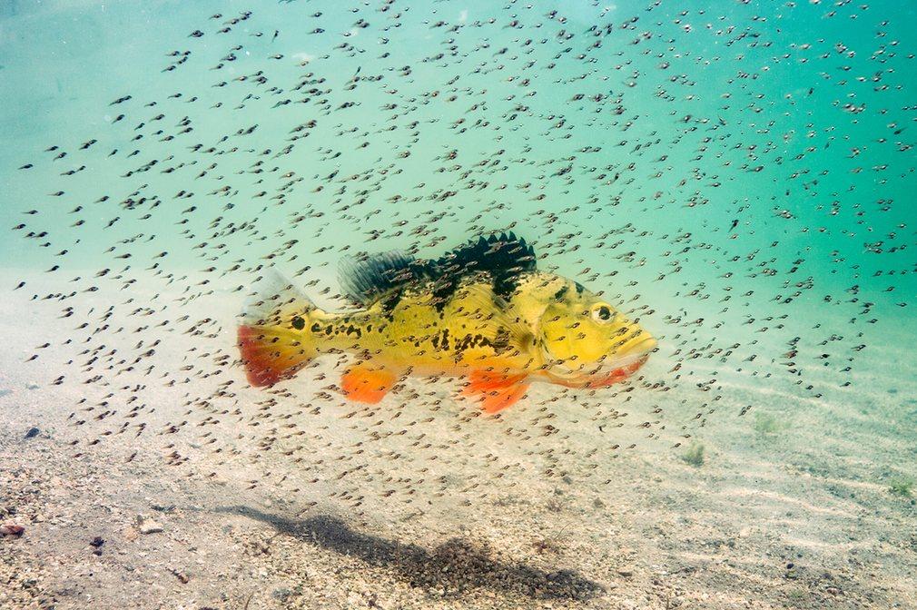 7. «Гордая мамочка». (Майами, штат Флорида). National Geographic Nature Photographer of the Year.