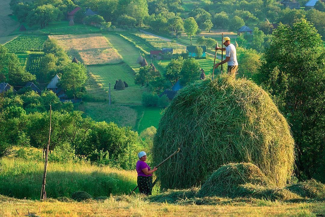 13. Заготовка сена в Трансильвании. @wanderlustav.