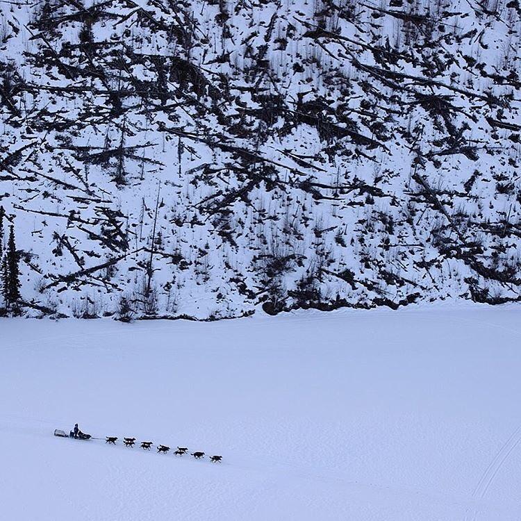 7. Гонка на собачьих упряжках на Аляске. @marclesterphoto.