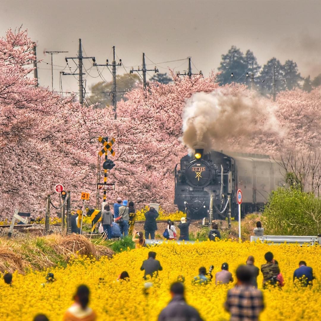 9. Цветение сакуры в Японии. @phantastic420.