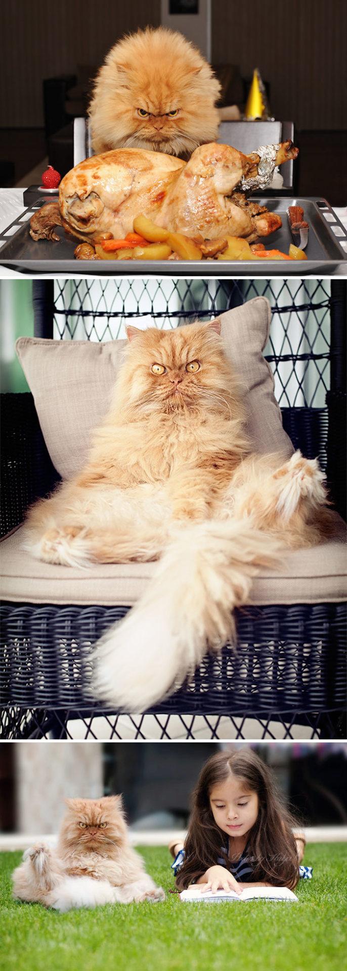 2. Этот кот явно замышляет что-то коварное.