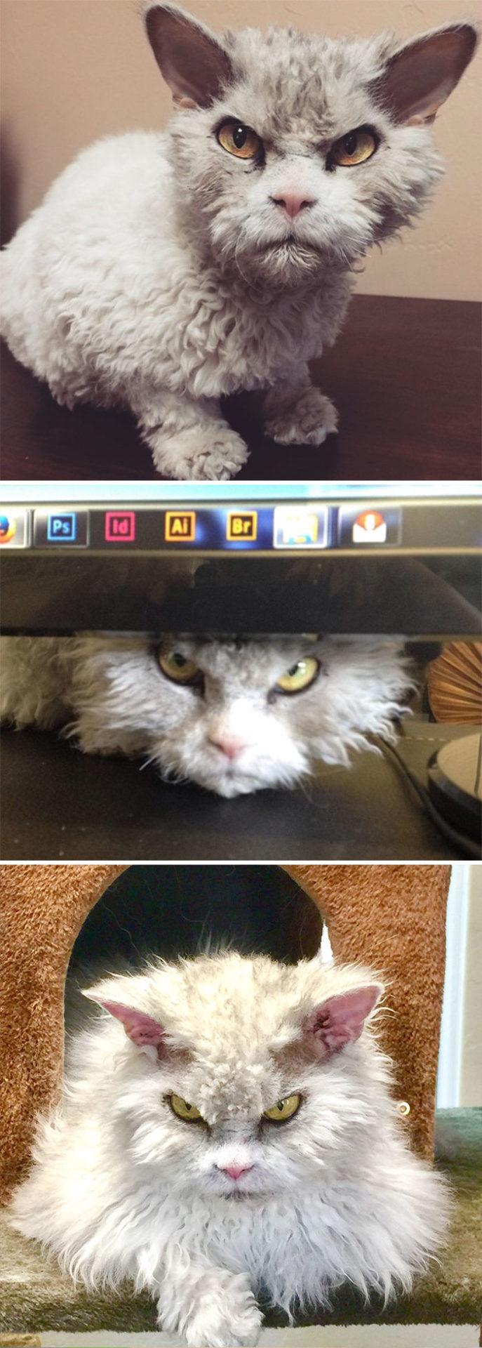 7. А это наш старый знакомый – кот Альберт.