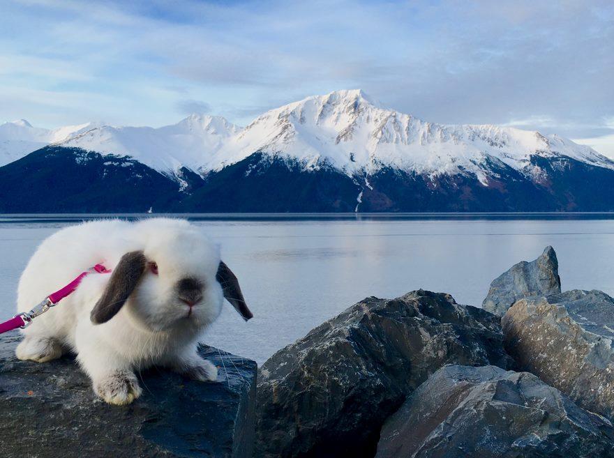 1. Пушистый комочек на фото – это не просто домашнее животное, но и замечательный партнер в туристическом походе.
