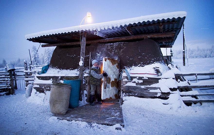 7. Оймяконский фермер держит своих коров в тепле, запирая их в этом сарае.