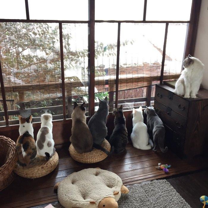 3. Котики удивляются снегу.