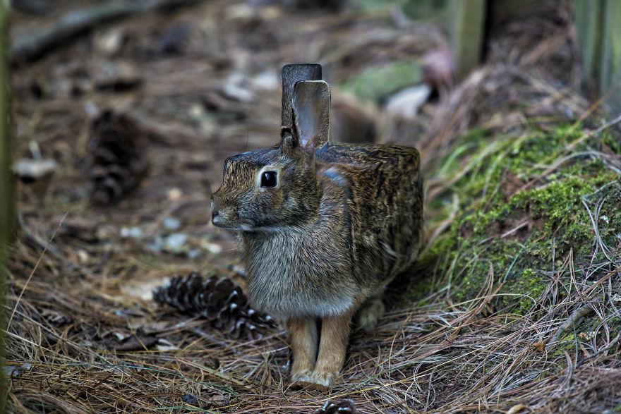 6. Фото животных дизайнер искал на фотостоках.