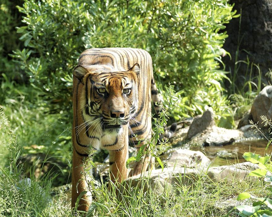 8. Чтобы трансформировать животное в куб дизайнер использовал инструмент Liquify.