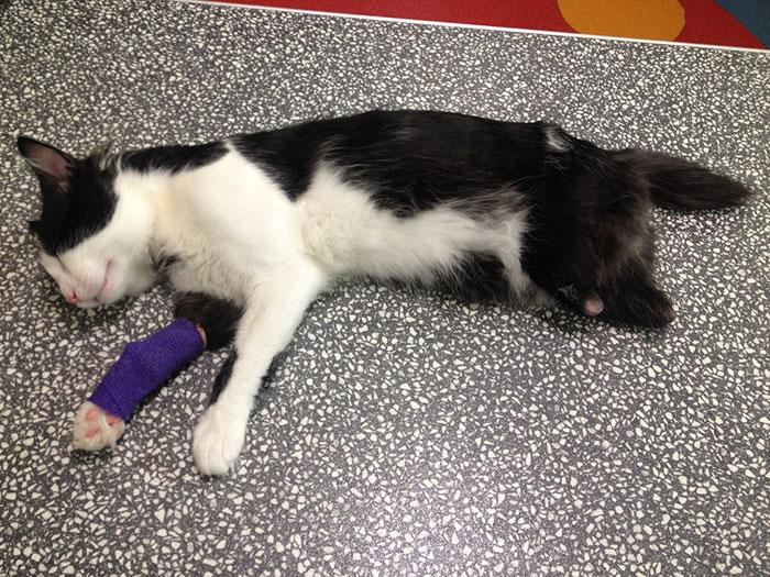 1. Знакомьтесь, это Пух, кот с ампутированными лапками, который попал под автомобиль или поезд в маленькой болгарской деревушке.