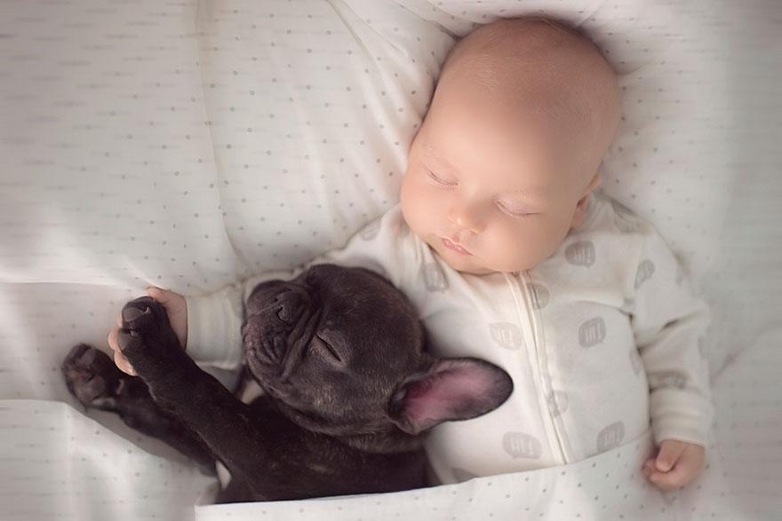 3. «Фарли терпеливо играет с Диланом и даже старается не храпеть, пока они спят». Эта парочка не разлей вода.