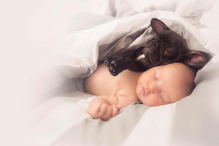 5. «Фарли очень нежный и неуклюжий щенок породы французский бульдог. Мы должны понимать, что он точно такой же ребенок».