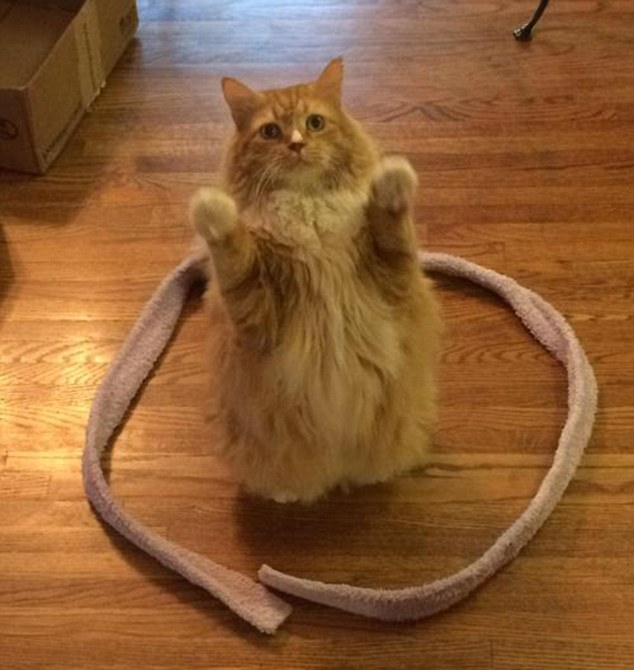 11. Просто попробуйте проделать это со своим котом.