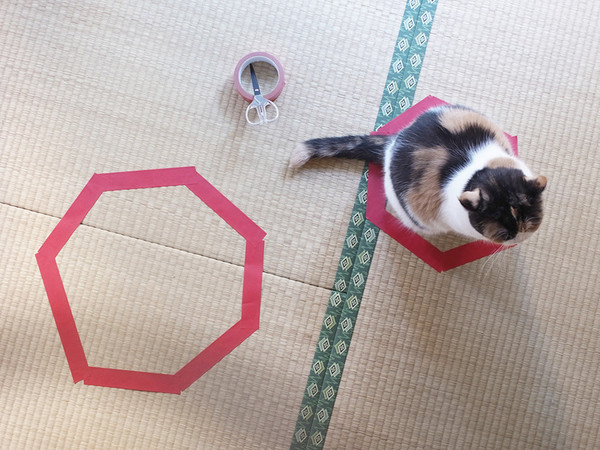 8. Кот с удовольствием облюбовал и второй круг.