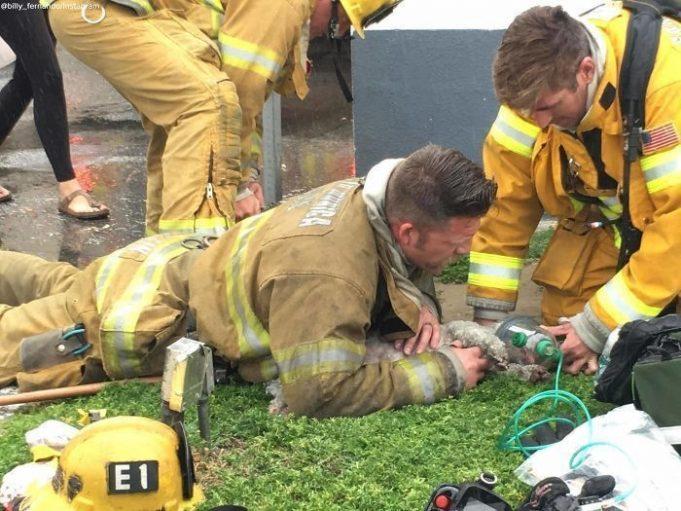 Пожарный спасает бездыханного пса сделав ему искусственное дыхание