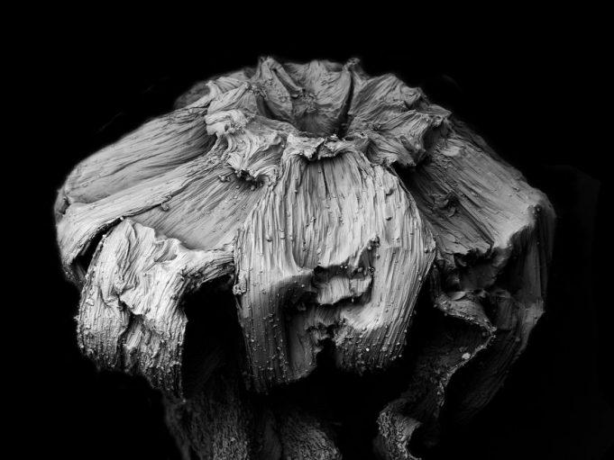Засохшие растения под микроскопом
