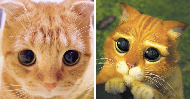 Кот из шрека мультик