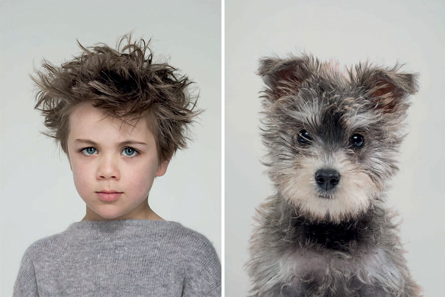 Собака похожа на своего хозяина картинки