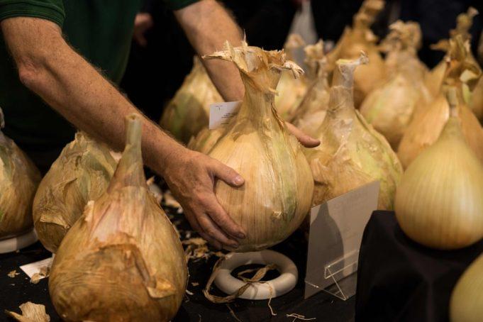 Йоркширский гигантский овощ — в фотографиях