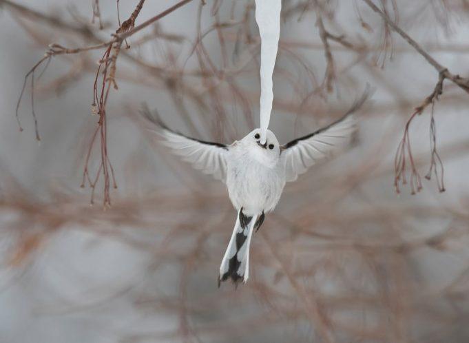 Фотограф дикой природы года — высоко оцениваемые работы