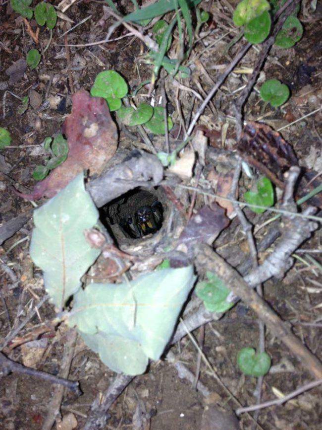 1. Будьте осторожны, исследуя странные норы у себя во дворе. Возможно в них вас поджидает неприятный сюрприз.