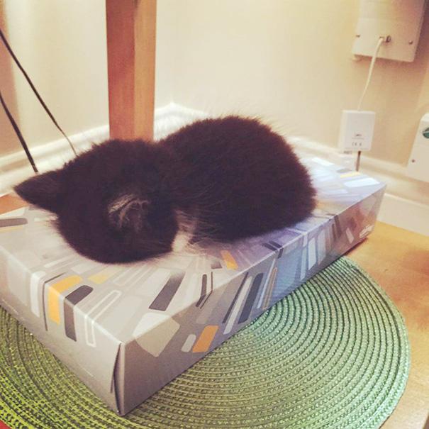 1. Кошеня Омар заснув в коробці з-під серветок.