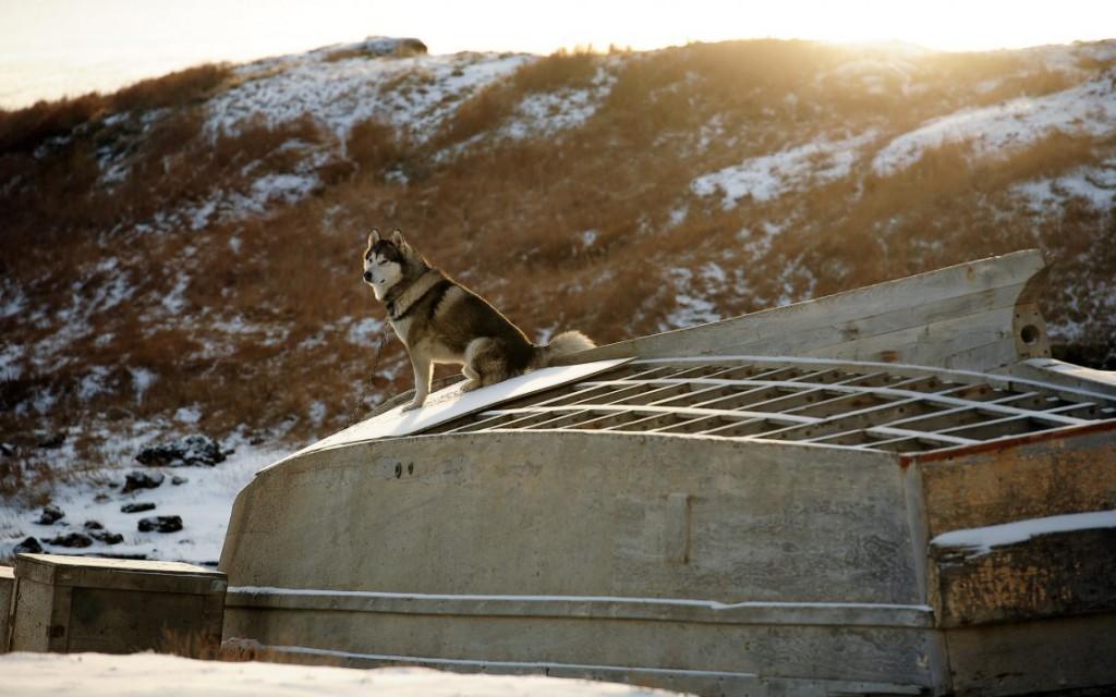 37. Собака решила насладиться вечерним солнцем после снегопада.
