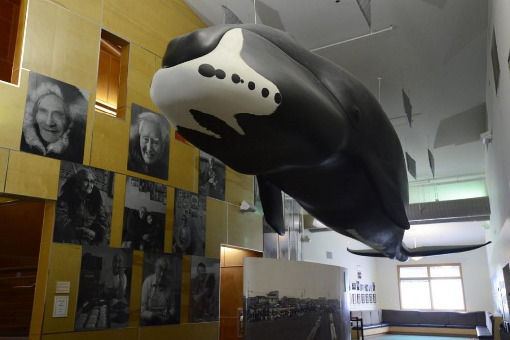 7. Кит приветствует всех посетителей музея.